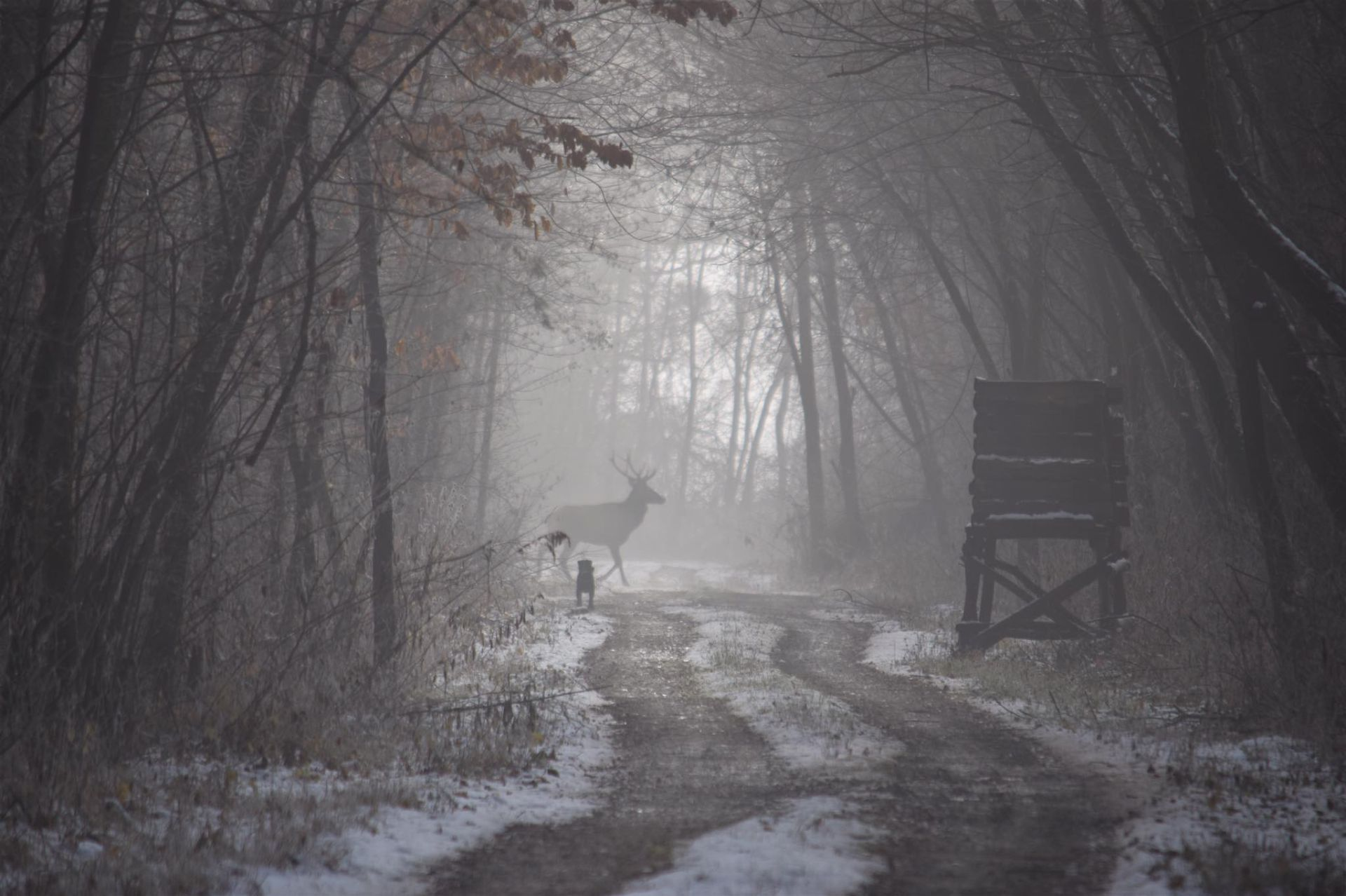 Mínusz van, vágni lehet a ködöt, mégsem maradnánk otthon – Hogyan túrázzunk télen?